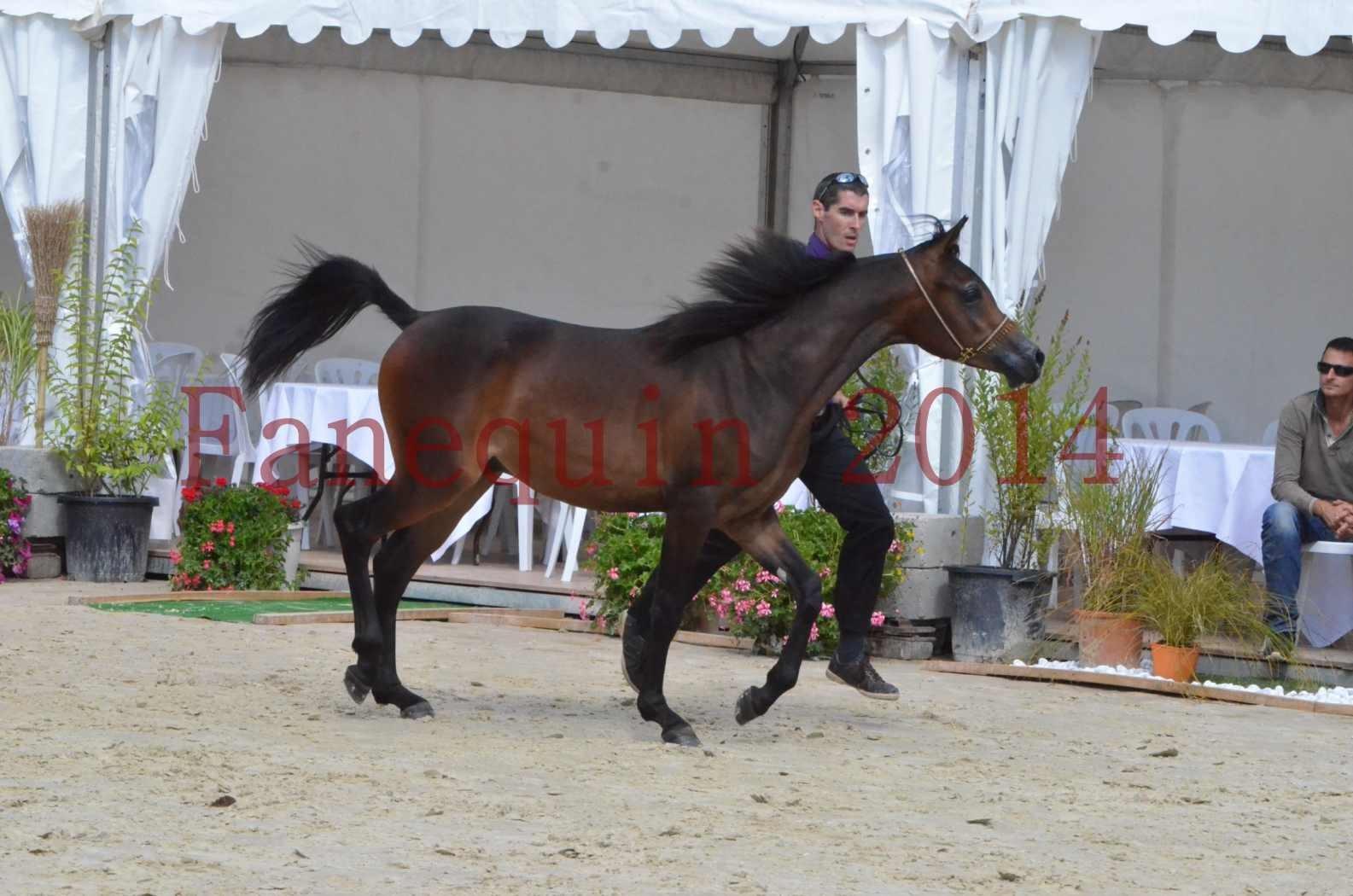 Championnat de FRANCE 2014 - Amateurs - SH FARAJAA - 22