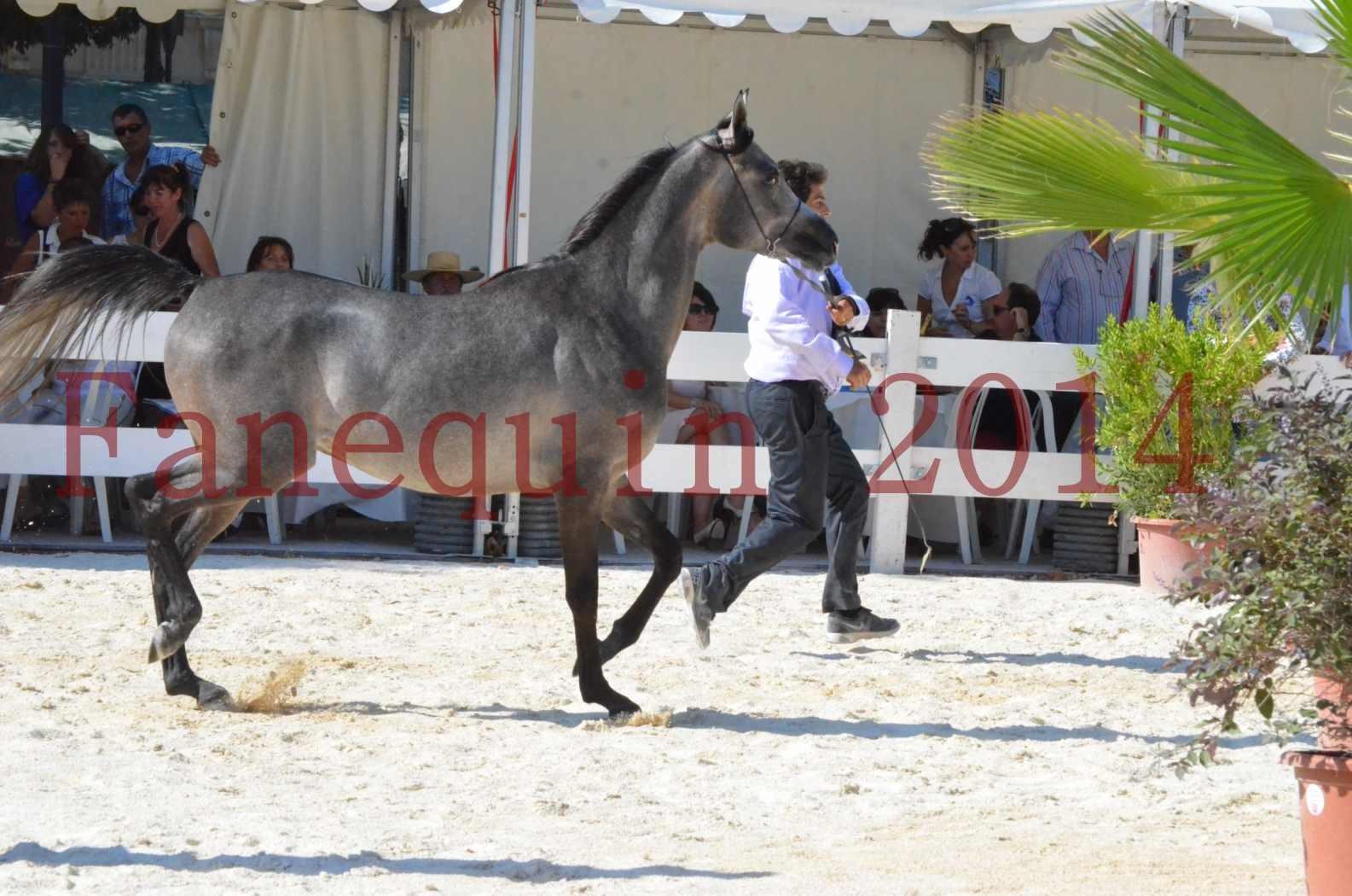 Concours National de Nîmes de chevaux ARABES 2014 - Championnat - JOSEPH'S BOUZIOLS - C 06