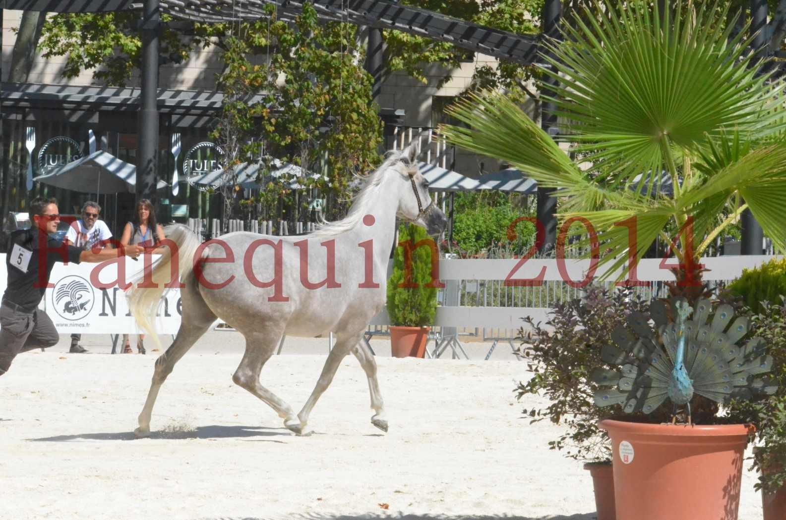Concours national de Nîmes 2014 - Sélection  - VOLODIA DE LAFON - 09