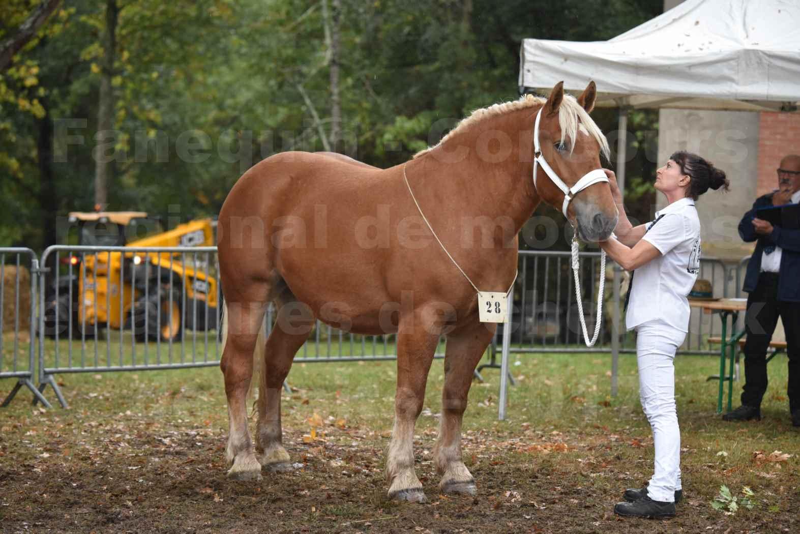 Concours Régional de chevaux de traits en 2017 - Trait COMTOIS - ETOILE 90 - 06