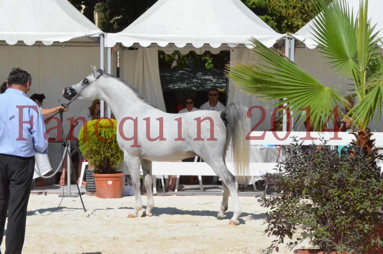 Concours National de Nîmes de chevaux ARABES 2014 - Sélection - SHAOLIN DE NEDJAIA - 73