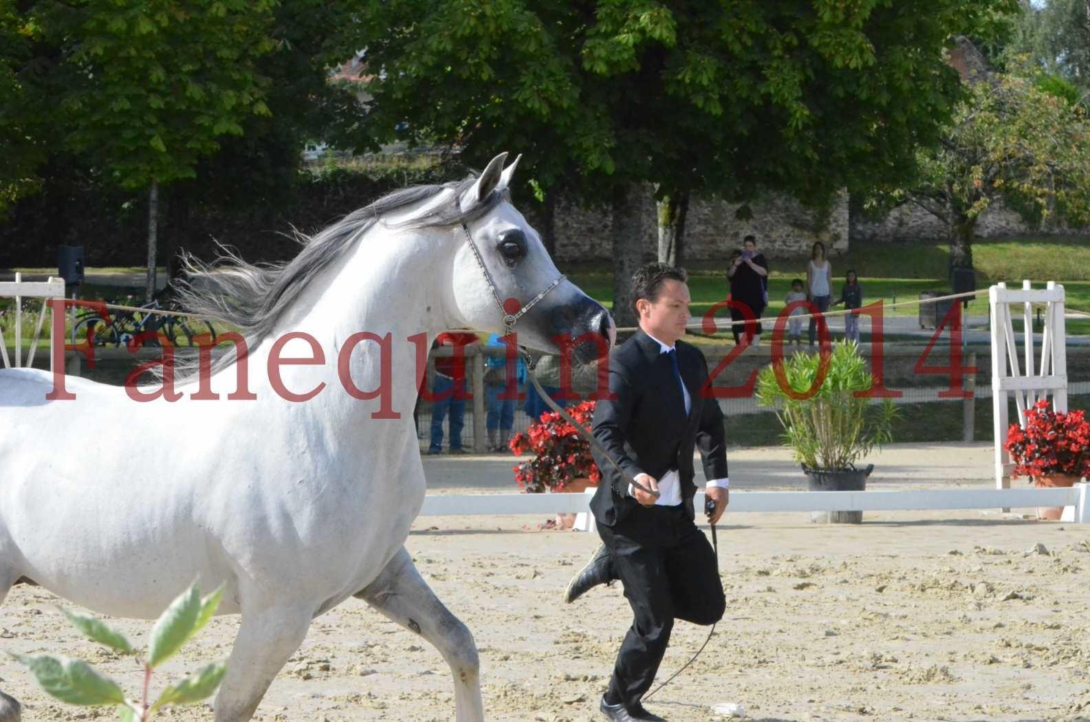 CHAMPIONNAT DE FRANCE  2014 A POMPADOUR - Sélection - SHAOLIN DE NEDJAIA - 06