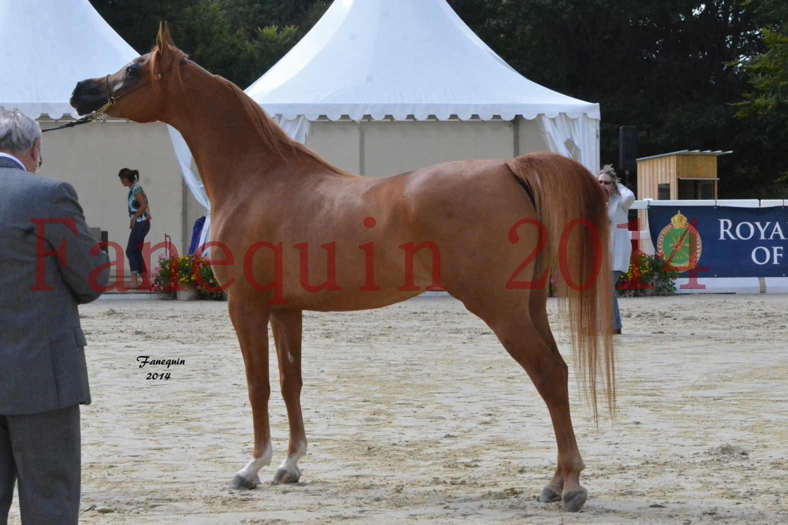 CHAMPIONNAT DE FRANCE 2014 A POMPADOUR - Notre Sélection - LUTFINAH JA - 08