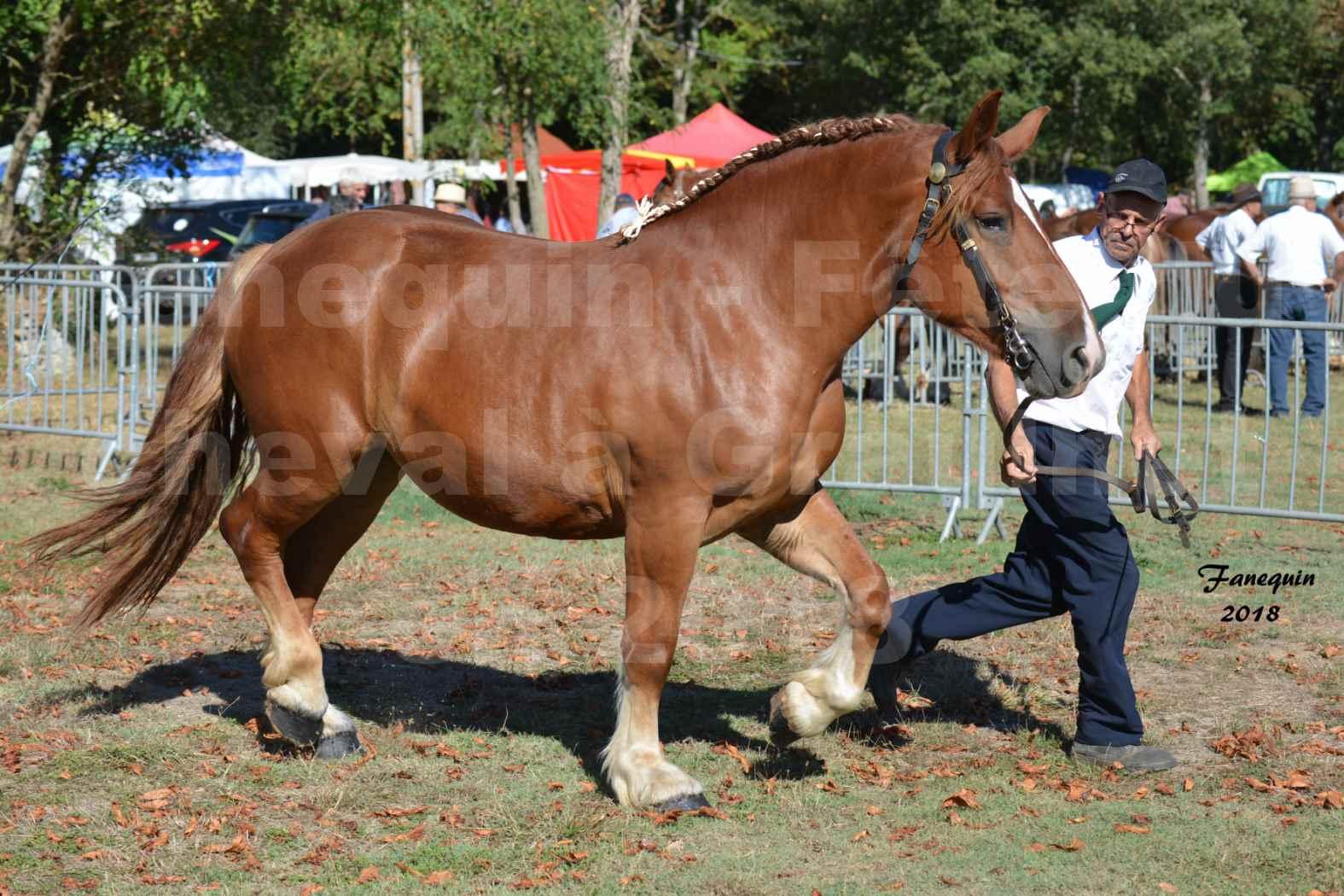 Fête du cheval à GRAULHET le 16 septembre 2018 - Concours Départemental de chevaux de traits - 05