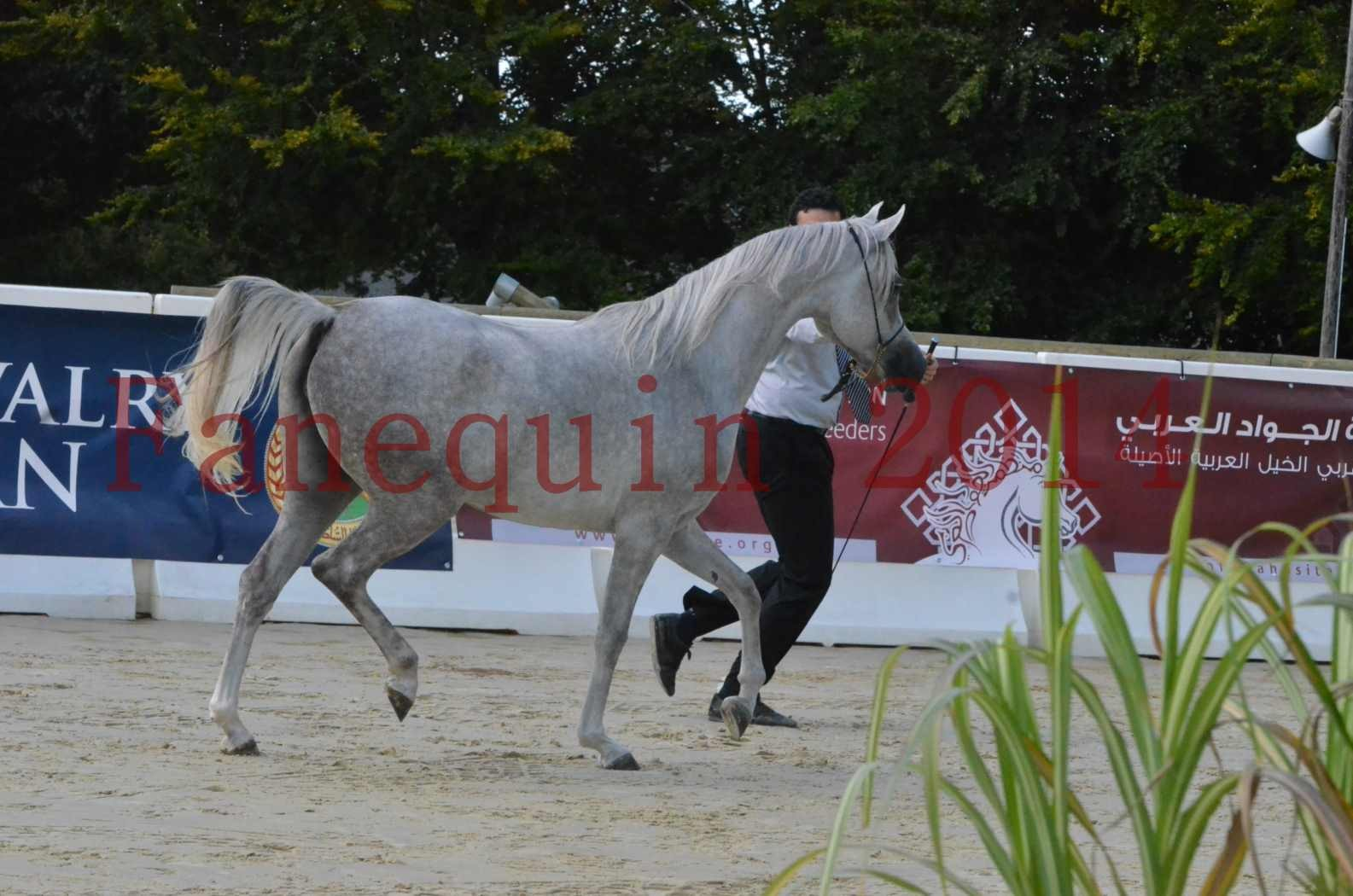 Championnat de FRANCE 2014 - Amateurs - VOLODIA DE LAFON - 007
