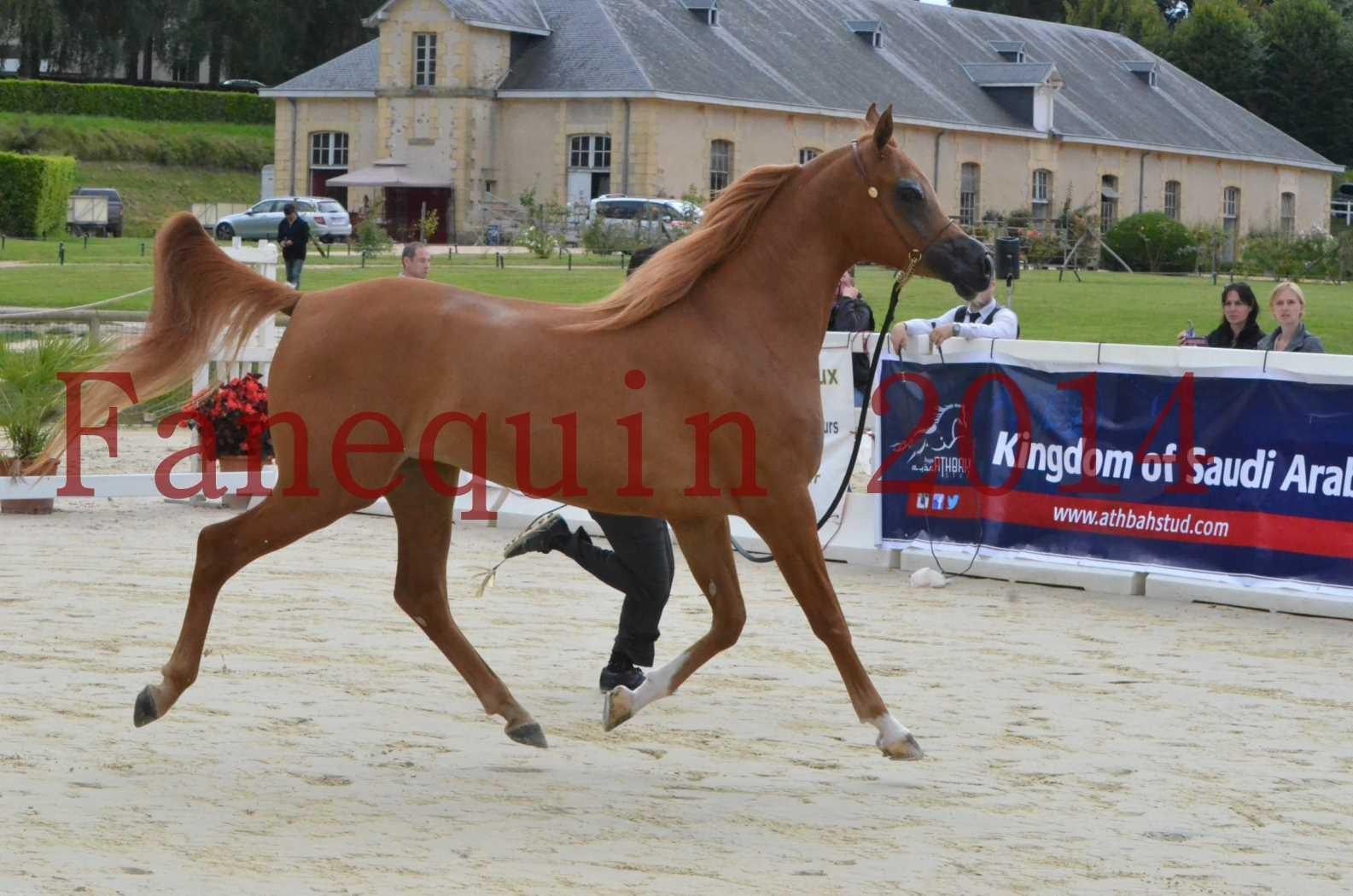 CHAMPIONNAT DE FRANCE 2014 A POMPADOUR - Sélection - LUTFINAH JA - 08