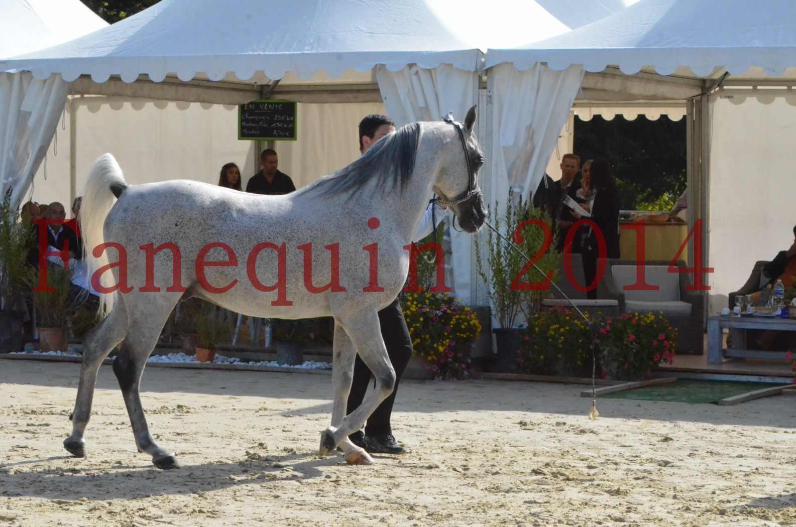 CHAMPIONNAT DE FRANCE  2014 A POMPADOUR - Sélection - SHEYK DE GARGASSAN - 04