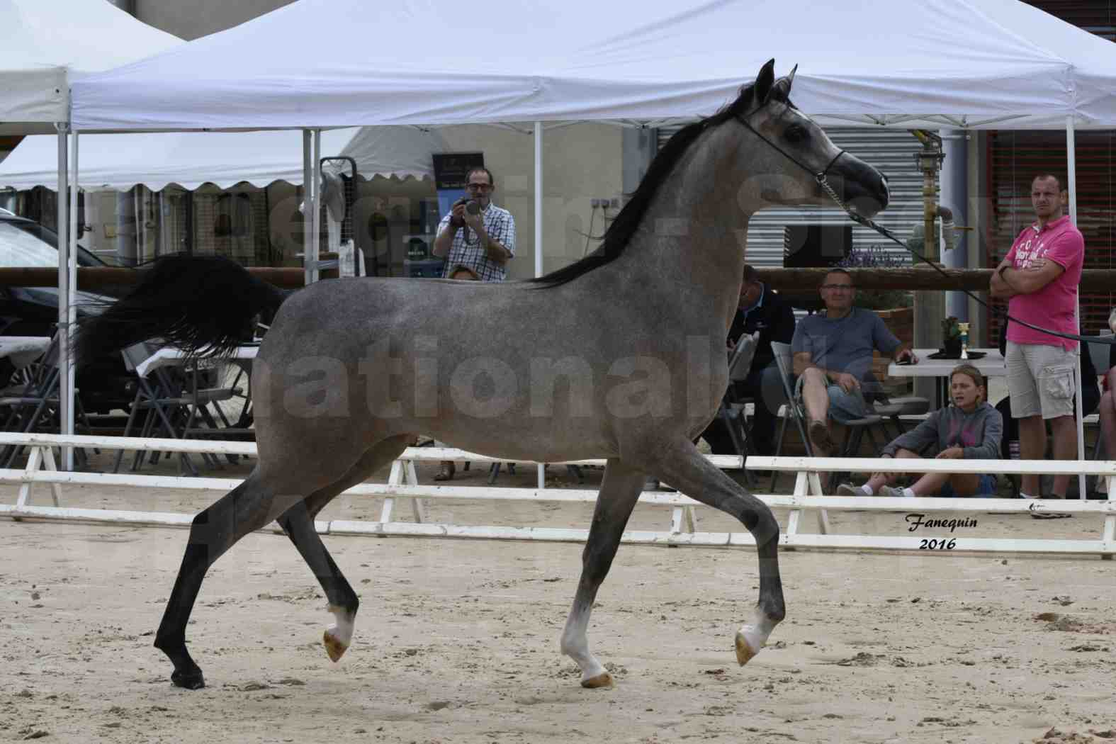 Show national de chevaux arabes de CHAZEY sur AIN 6 HAÏFA AL ADEYAT - 2