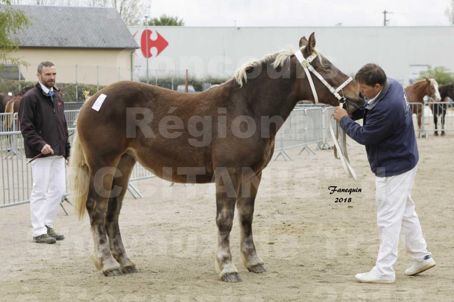 """Concours Régional """"OCCITANIE"""" de Chevaux de Traits à REQUISTA en 2018 - HINDY DES RAYNAUDS - 3"""