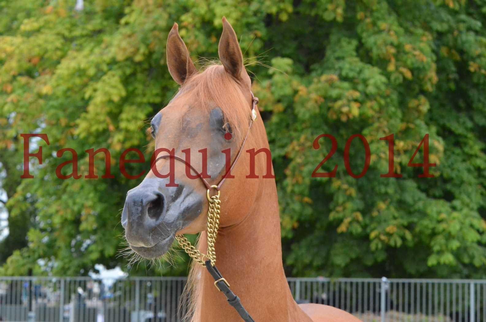 CHAMPIONNAT DE FRANCE 2014 A POMPADOUR - Sélection - LUTFINAH JA - 03