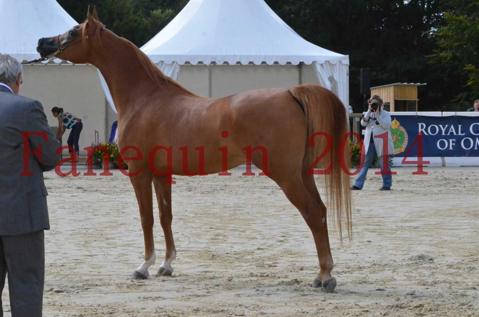 CHAMPIONNAT DE FRANCE 2014 A POMPADOUR - Sélection - LUTFINAH JA - 41