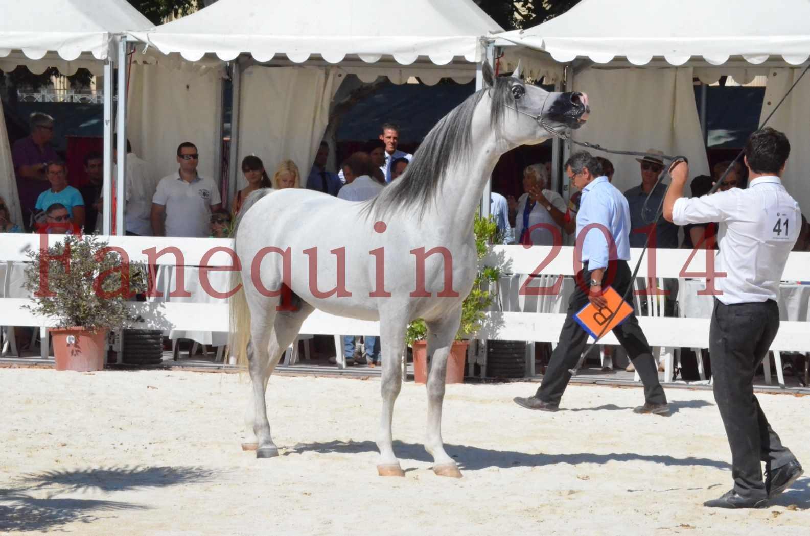 Concours National de Nîmes de chevaux ARABES 2014 - Sélection - SHAOLIN DE NEDJAIA - 77