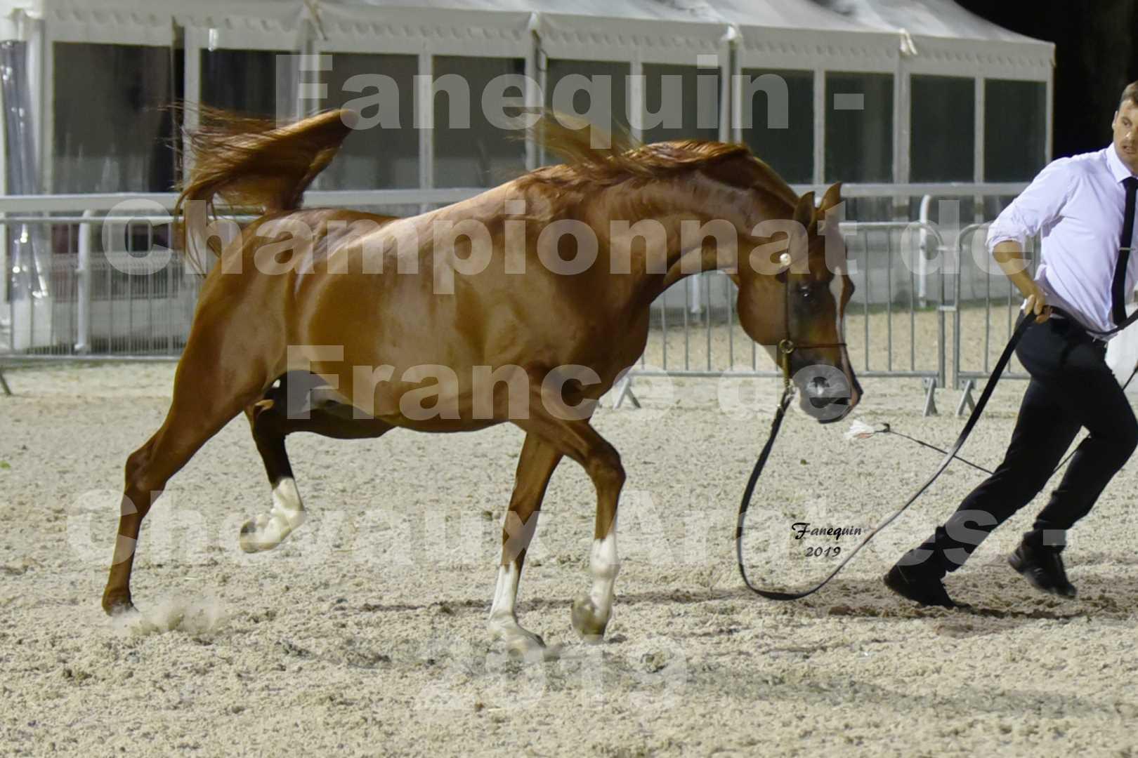 Championnat de France des chevaux Arabes en 2019 à VICHY - DZHARI NUNKI - 1