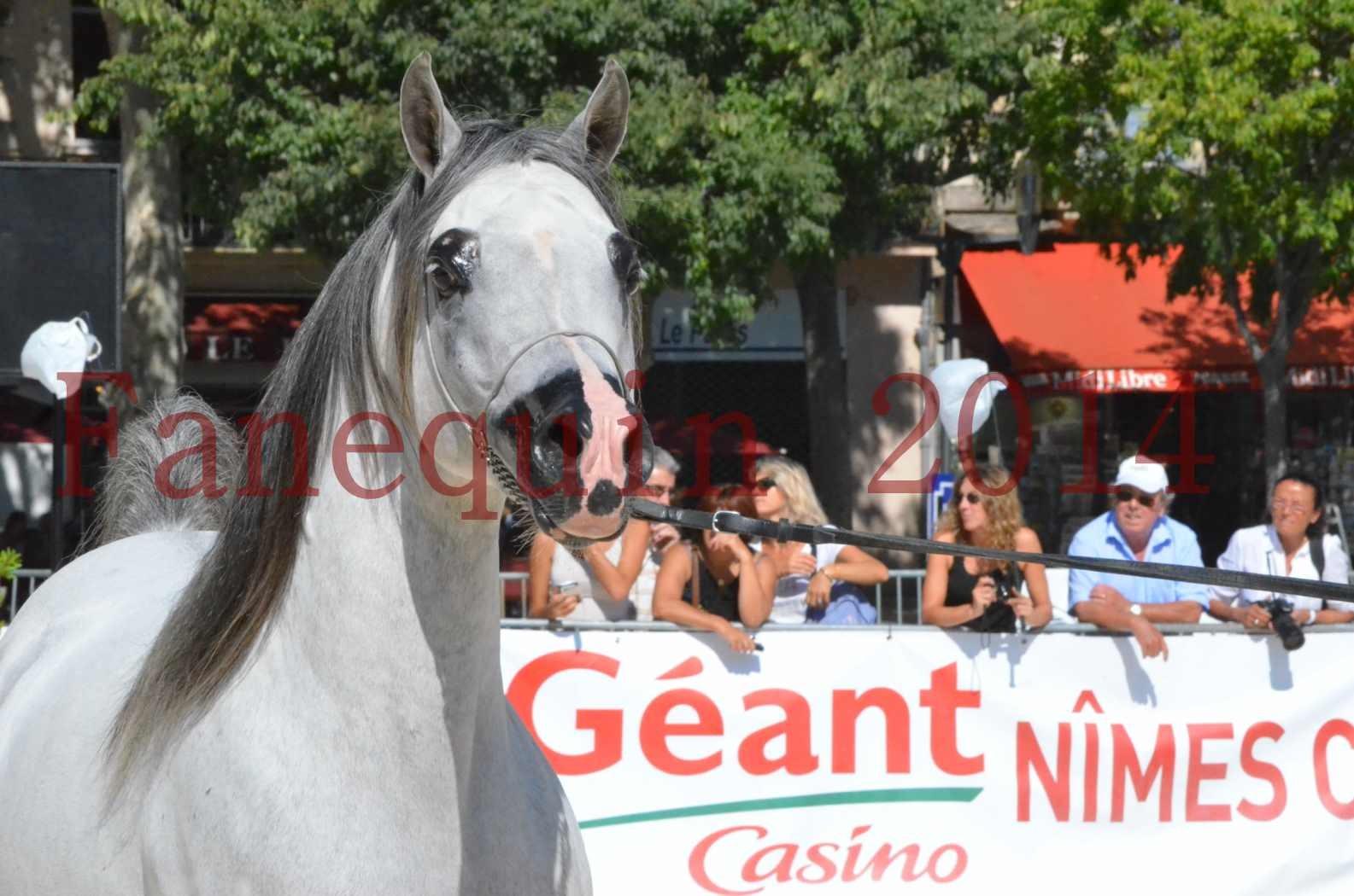 Concours National de Nîmes de chevaux ARABES 2014 - Sélection - SHAOLIN DE NEDJAIA - 13