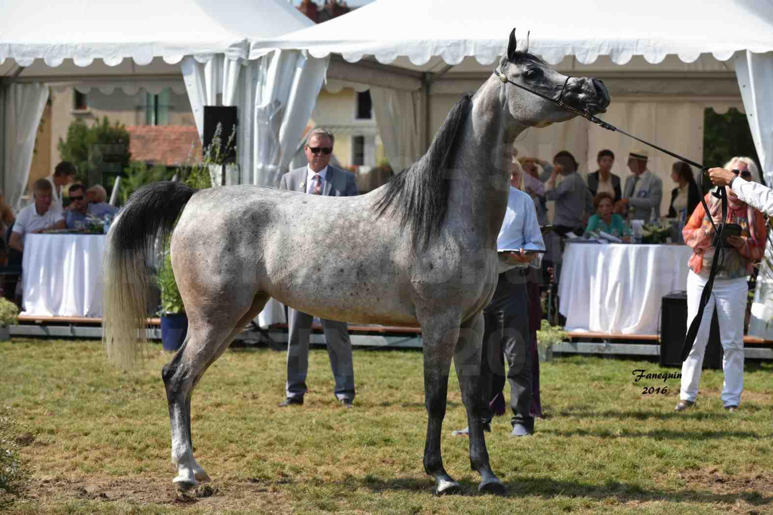 International Arabian Horse Show B de VICHY 2016 - ISABELLA - Notre Sélection - 08