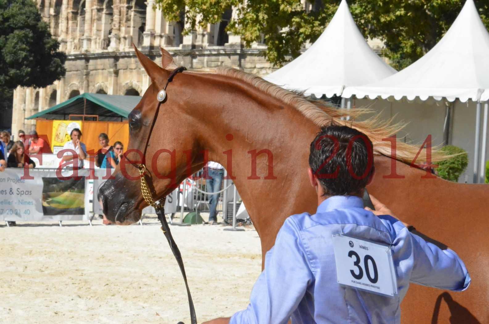 Concours National de Nîmes de chevaux ARABES 2014 - Championnat - MASSAI DE BARREL - 68