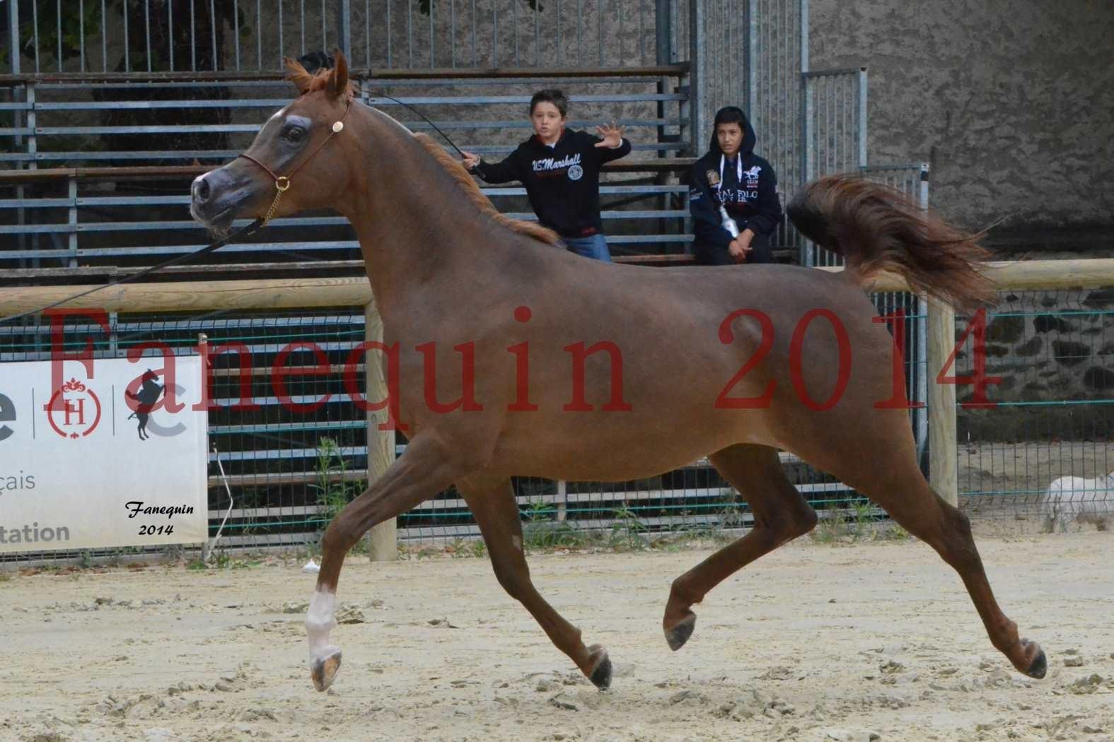 CHAMPIONNAT DE FRANCE 2014 A POMPADOUR - Notre Sélection - BADI'AH DE CARTHEREY - 13