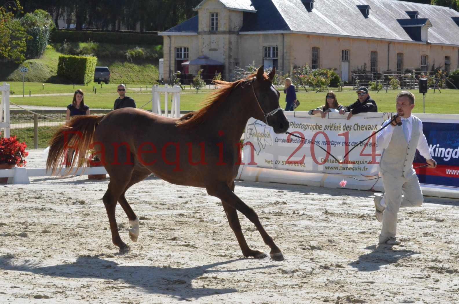 Championnat de FRANCE 2014 - Amateurs - LAMAL - 37