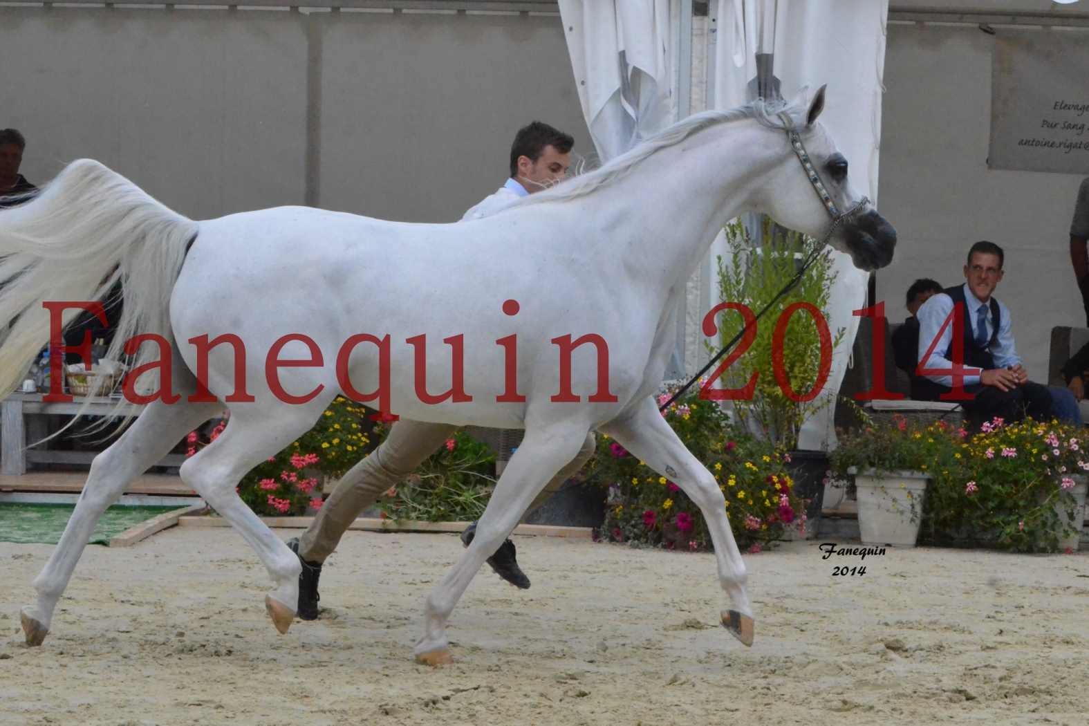 CHAMPIONNAT DE FRANCE 2014 A POMPADOUR - Notre Sélection - BLEUENN MILIN AVEL - 03