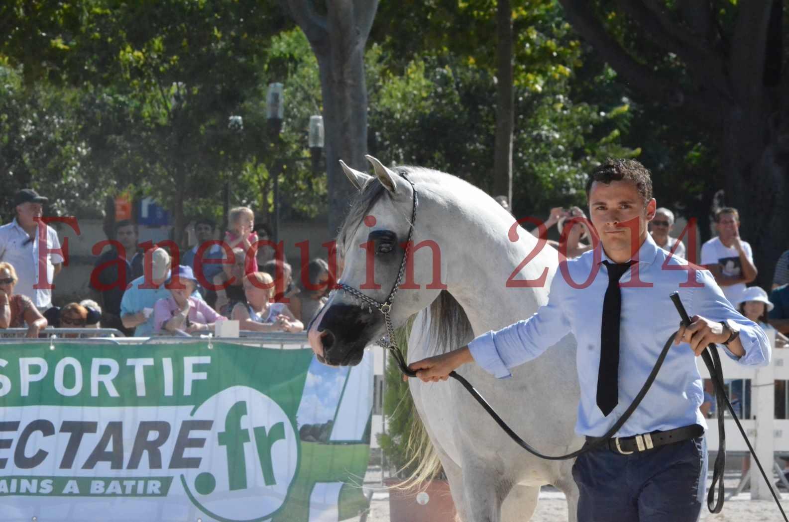 Concours National de Nîmes de chevaux ARABES 2014 - Championnat - SHAOLIN DE NEDJAIA - 44
