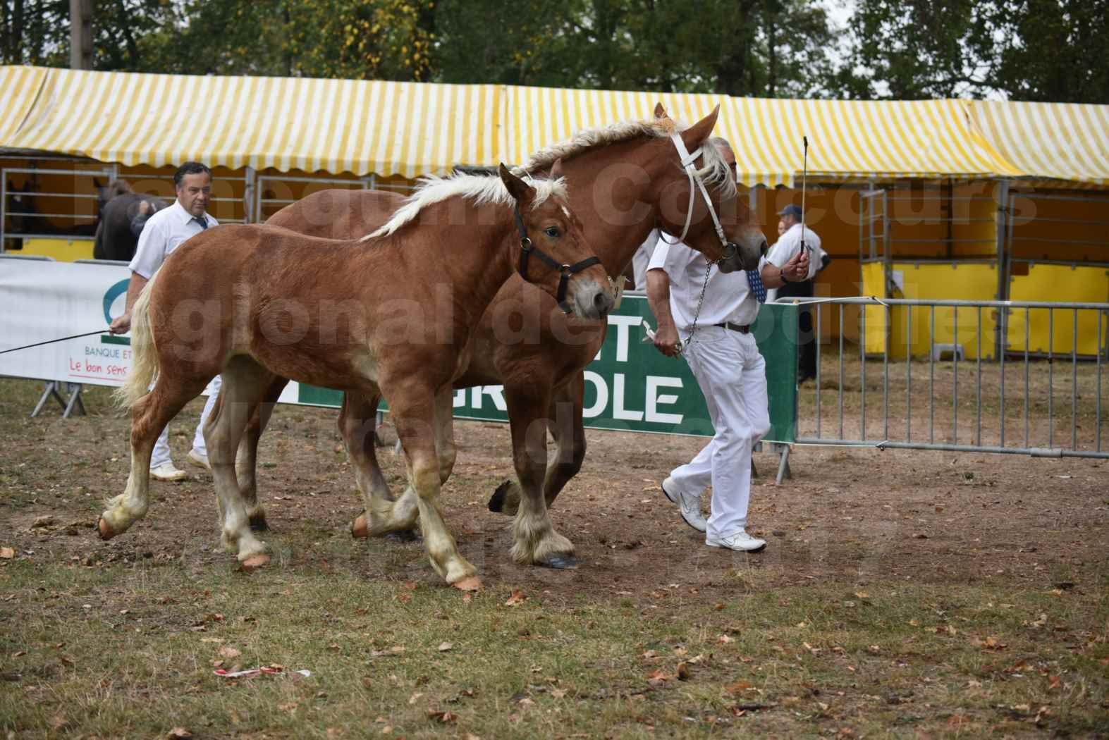 Concours Régional de chevaux de traits en 2017 - Jument & Poulain COMTOIS - BAILLA DU CLOS - 08