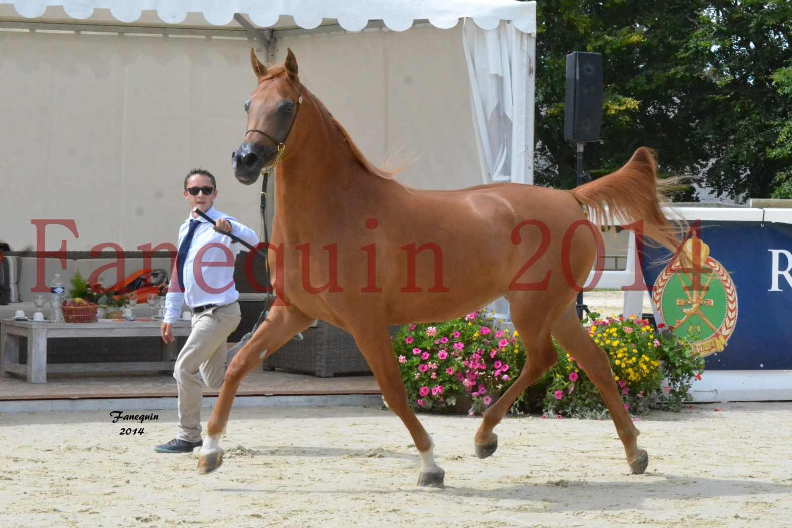 CHAMPIONNAT DE FRANCE 2014 A POMPADOUR - Notre Sélection - LUTFINAH JA - 29