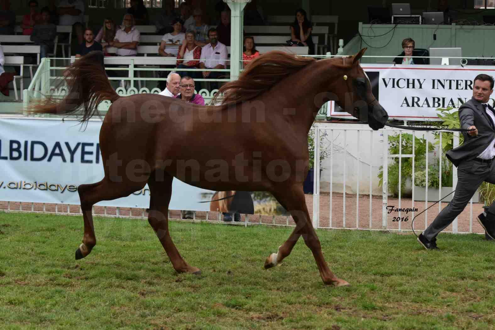 International Arabian Horse Show B de VICHY 2016 - PEARL DE DJOON - Notre Sélection - 08