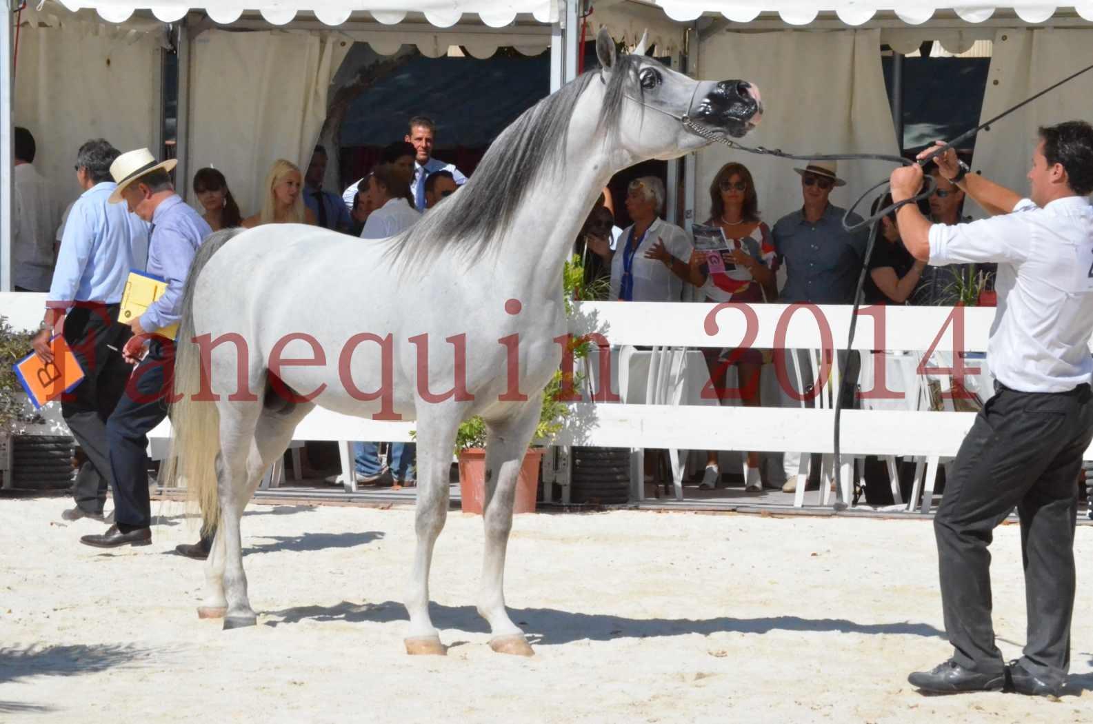 Concours National de Nîmes de chevaux ARABES 2014 - Sélection - SHAOLIN DE NEDJAIA - 79