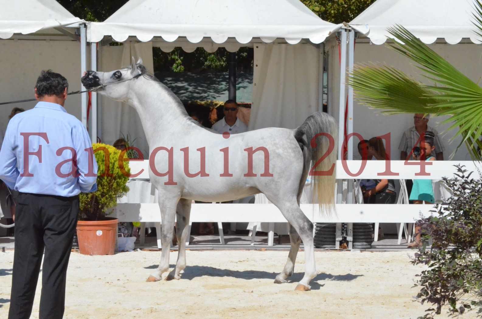 Concours National de Nîmes de chevaux ARABES 2014 - Sélection - SHAOLIN DE NEDJAIA - 70