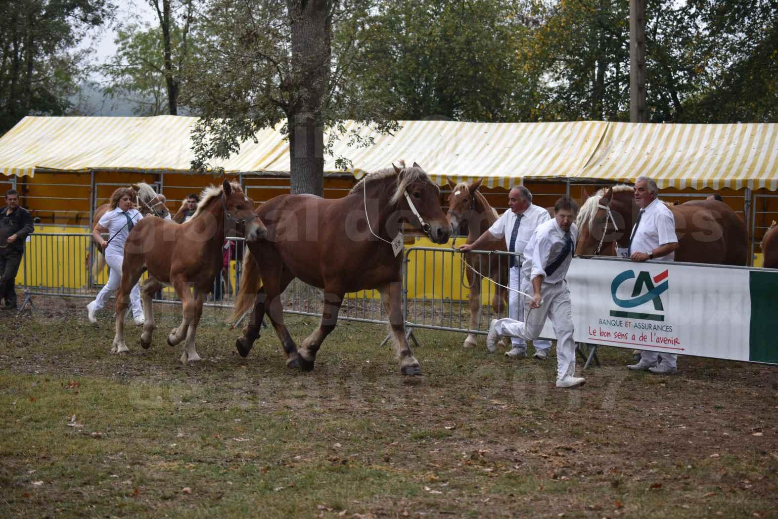 Concours Régional de chevaux de traits en 2017 - Jument & Poulain Trait COMTOIS - CHIPPIE 2 - 10