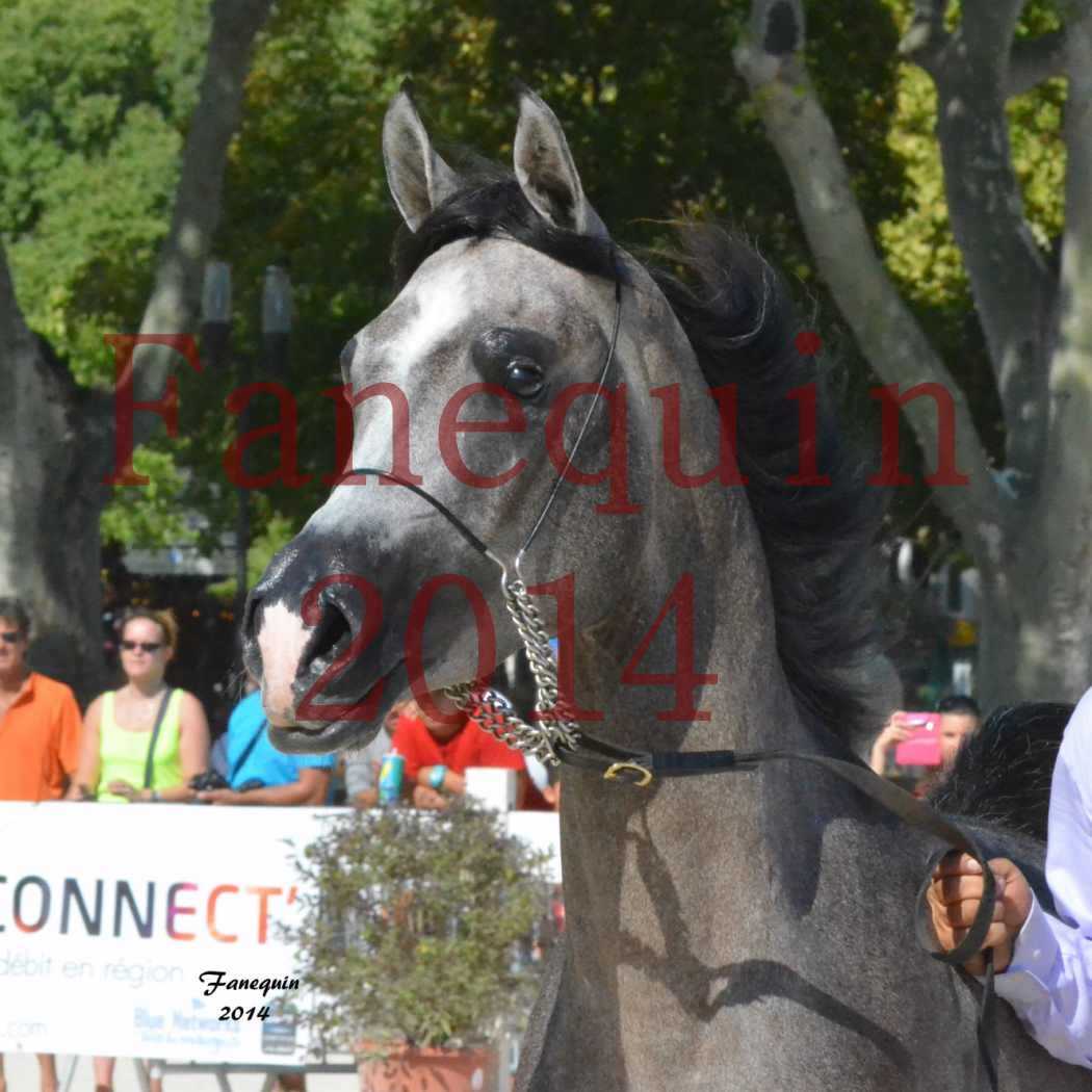 Concours National de Nîmes de chevaux ARABES 2014 - Notre Sélection - Portraits - JOSEPH'S BOUZIOLS - 02