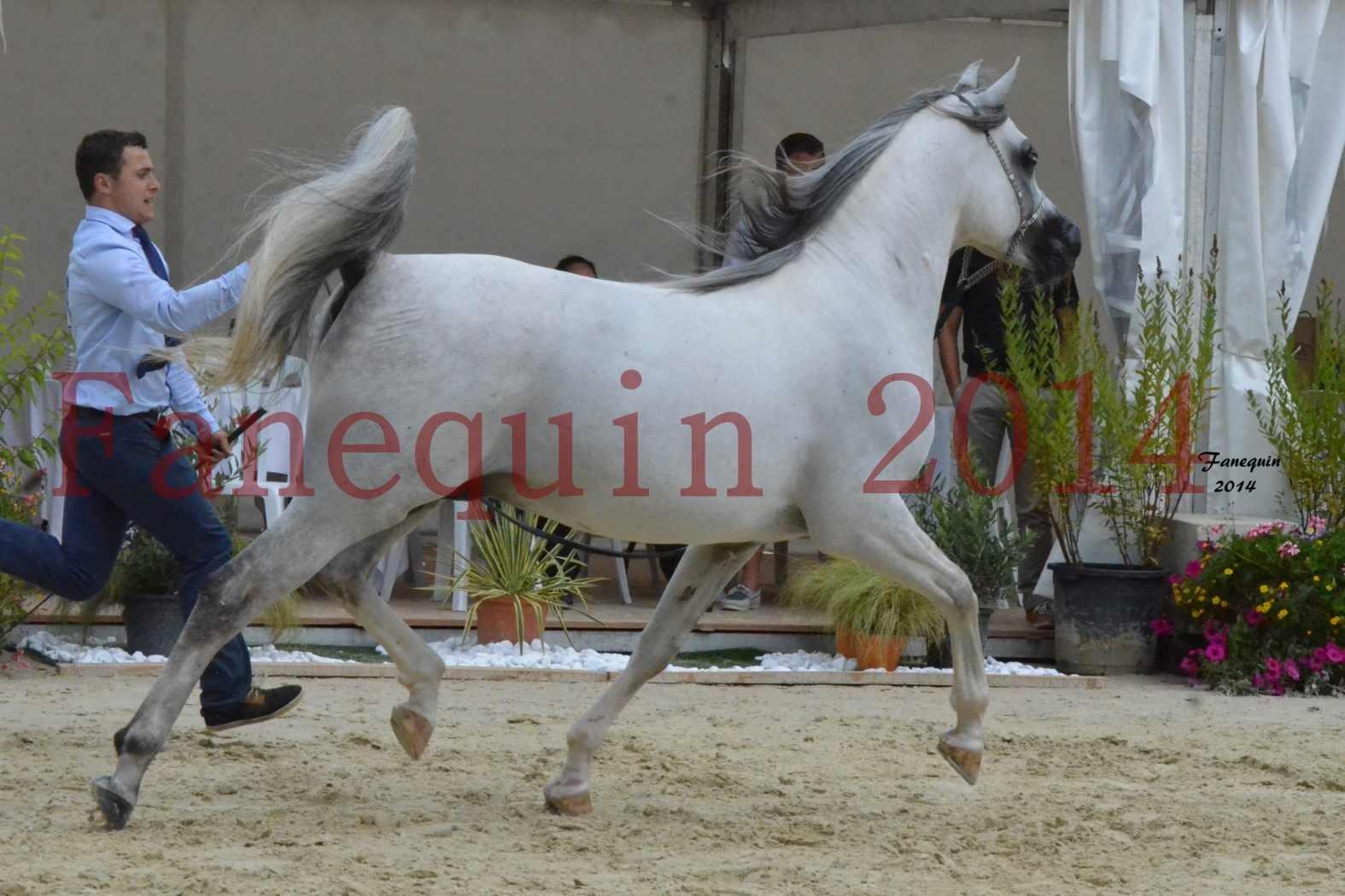 CHAMPIONNAT DE FRANCE  2014 A POMPADOUR - Notre Sélection - SHAOLIN DE NEDJAIA - 22