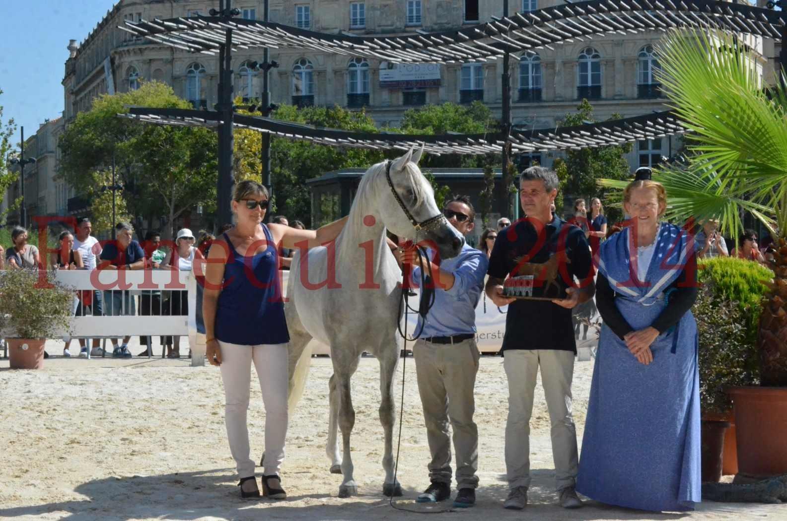 Concours national de Nîmes 2014 - Championnat Femelles Juniors - VOLODIA DE LAFON - 21