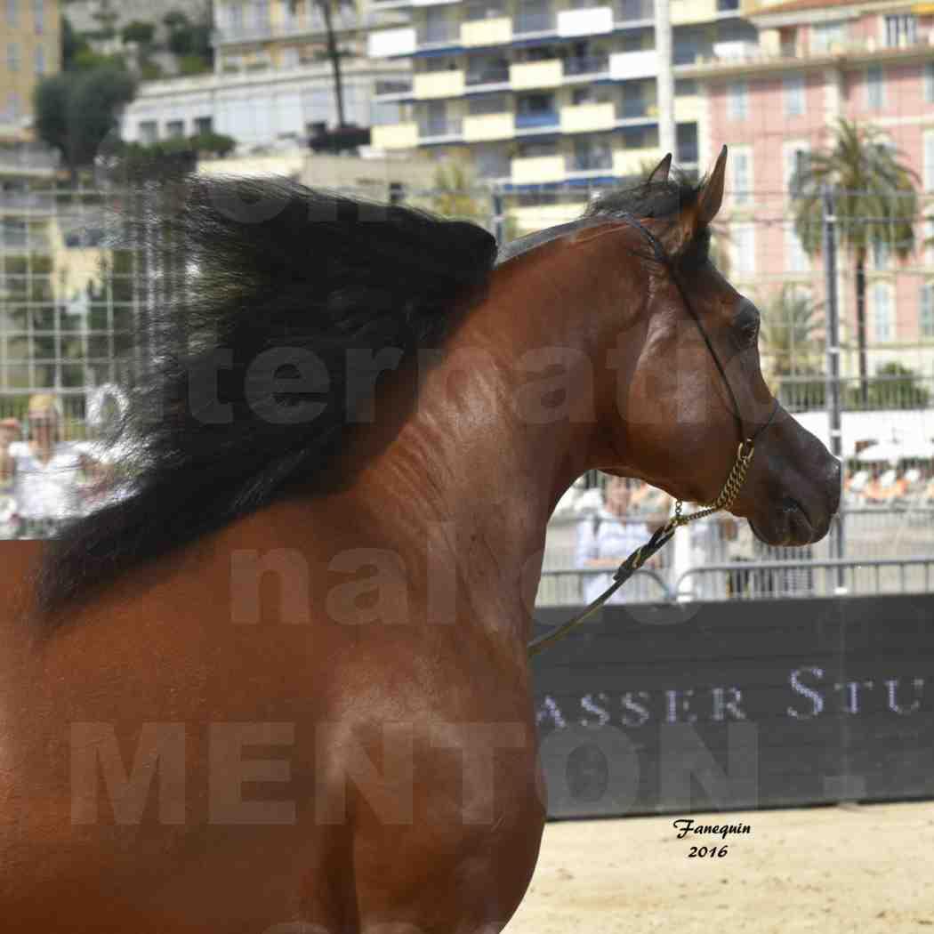 Championnat du pur-sang arabe de la Méditerranée et des pays arabes - MENTON 2016 - GALLARDO J - Notre Sélection - Portraits - 4