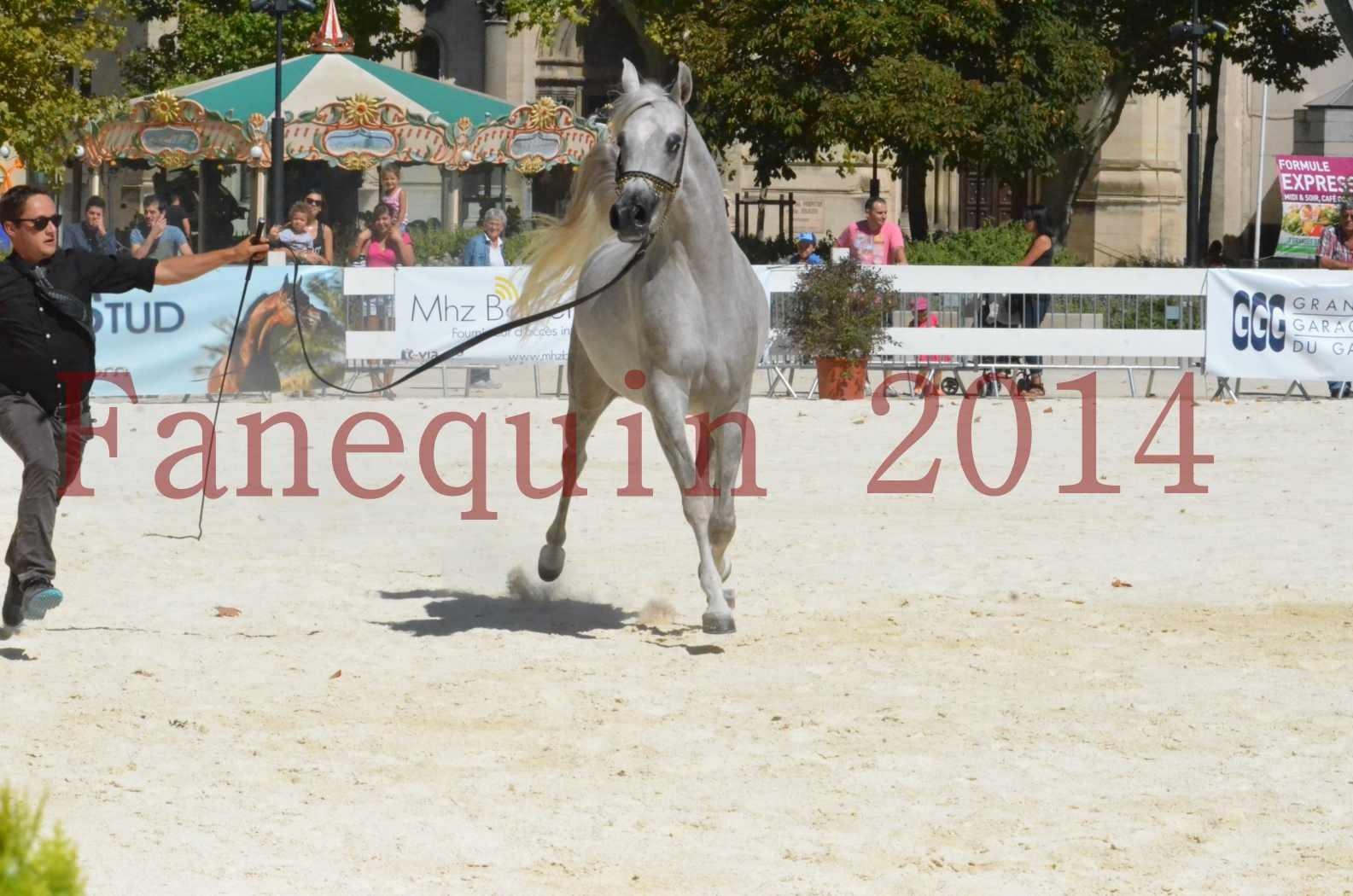 Concours national de Nîmes 2014 - Sélection  - VOLODIA DE LAFON - 07