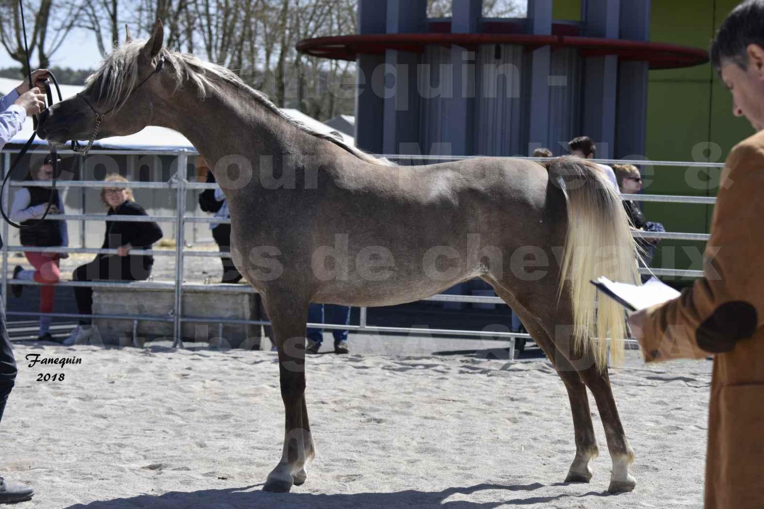 Concours d'élevage de Chevaux Arabes - Demi Sang Arabes - Anglo Arabes - ALBI les 6 & 7 Avril 2018 - DAENERYS DE LAFON - Notre Sélection - 05