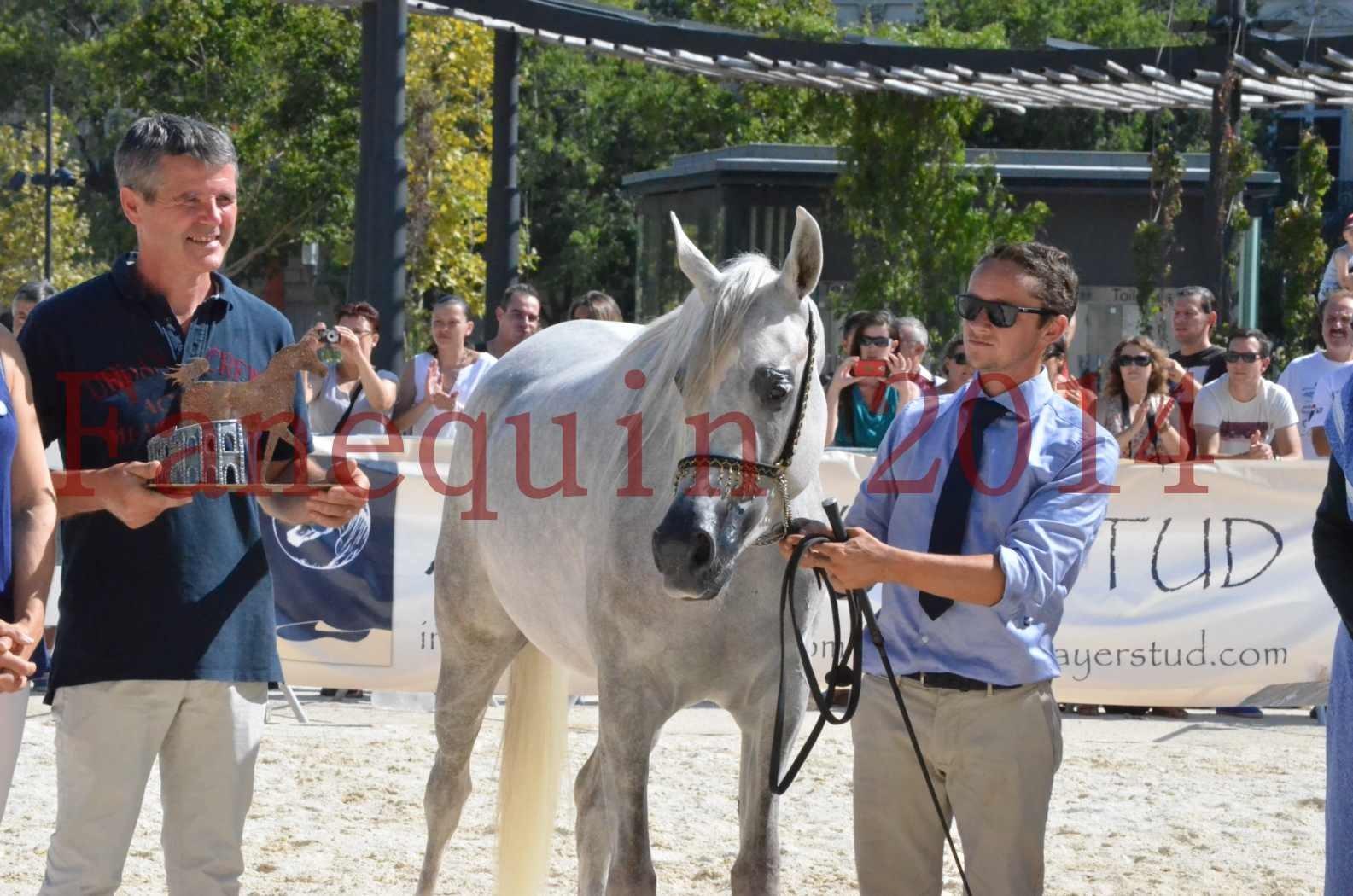 Concours national de Nîmes 2014 - Championnat Femelles Juniors - VOLODIA DE LAFON - 28
