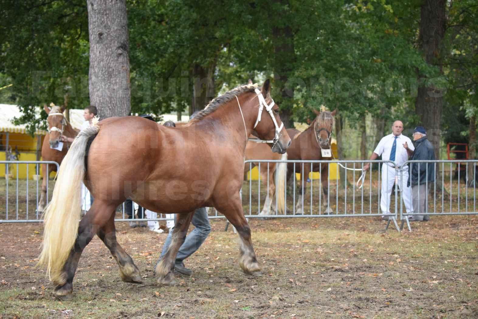 Concours Régional de chevaux de traits en 2017 - Trait COMTOIS - ESQUISSE DE VIELLE - 11