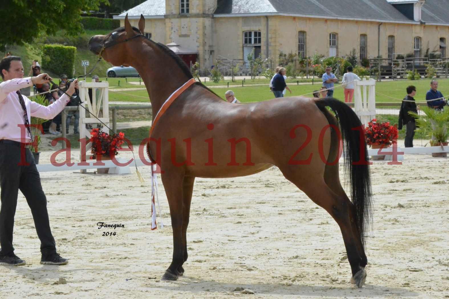 CHAMPIONNAT DE FRANCE 2014 A POMPADOUR - Notre Sélection - KARAWAN ALBIDAYER - 12