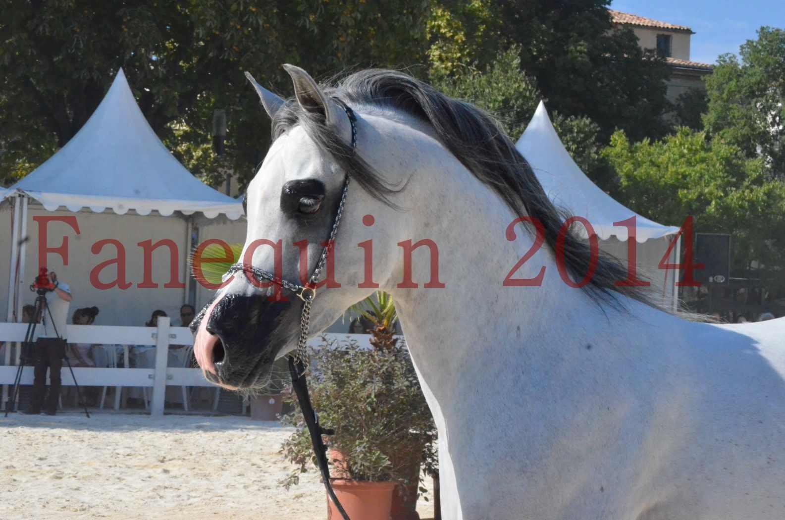 Concours National de Nîmes de chevaux ARABES 2014 - Championnat - SHAOLIN DE NEDJAIA - 23