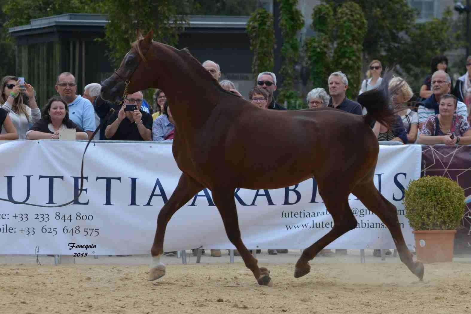 KARAM ALBIDAYER en 2015 - Concours national Nîmes prestige - notre sélection - 14