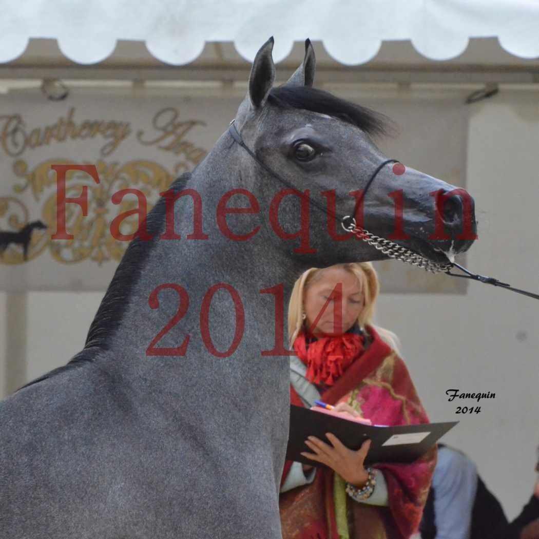 CHAMPIONNAT DE FRANCE 2014 A POMPADOUR - Notre Sélection - Portraits - AL MINYA - 4