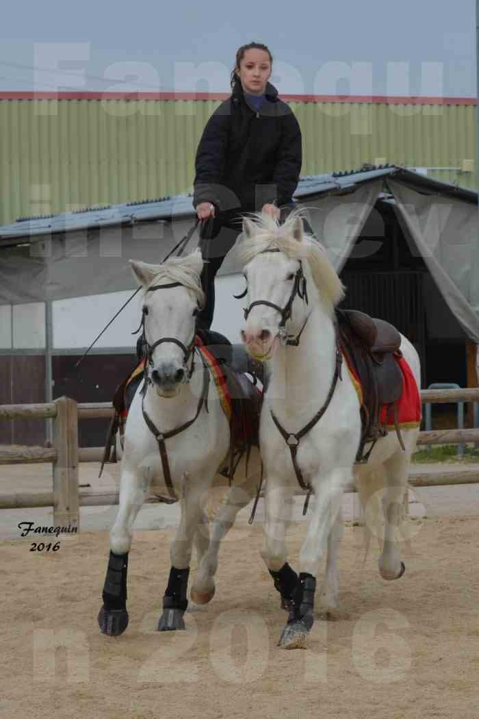 Cheval Passion 2016 - CAMARGUE poste hongroise - 3