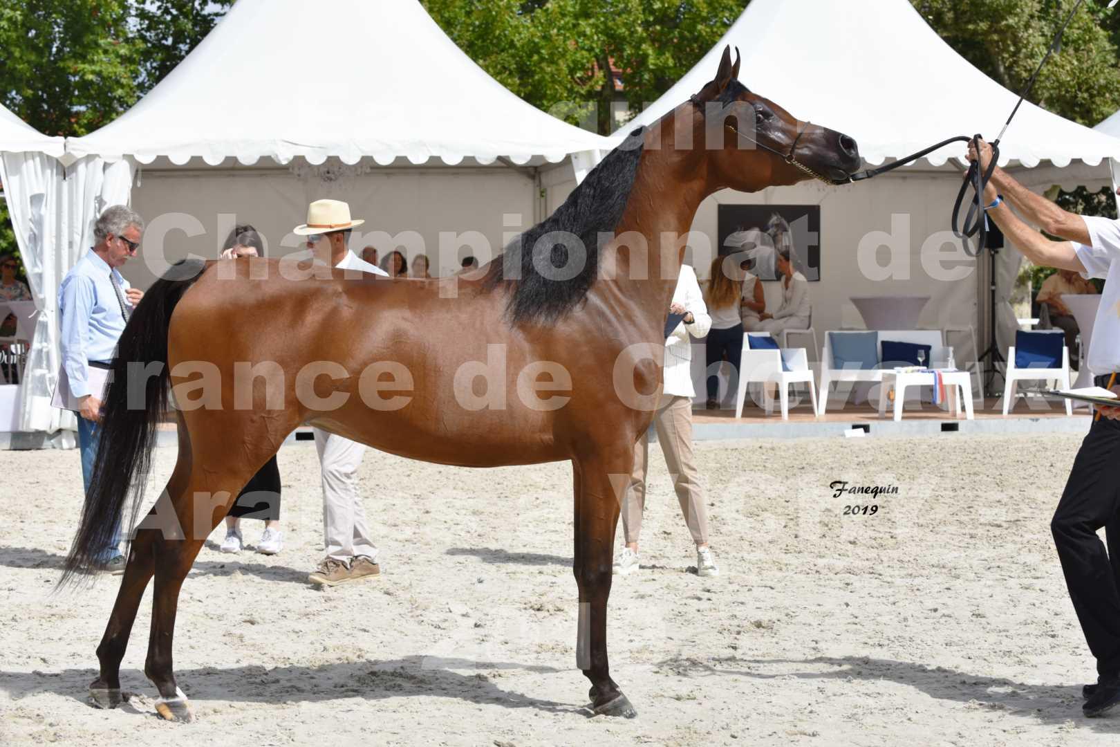 Championnat de France des chevaux Arabes en 2019 à VICHY - MADONNA J - 6