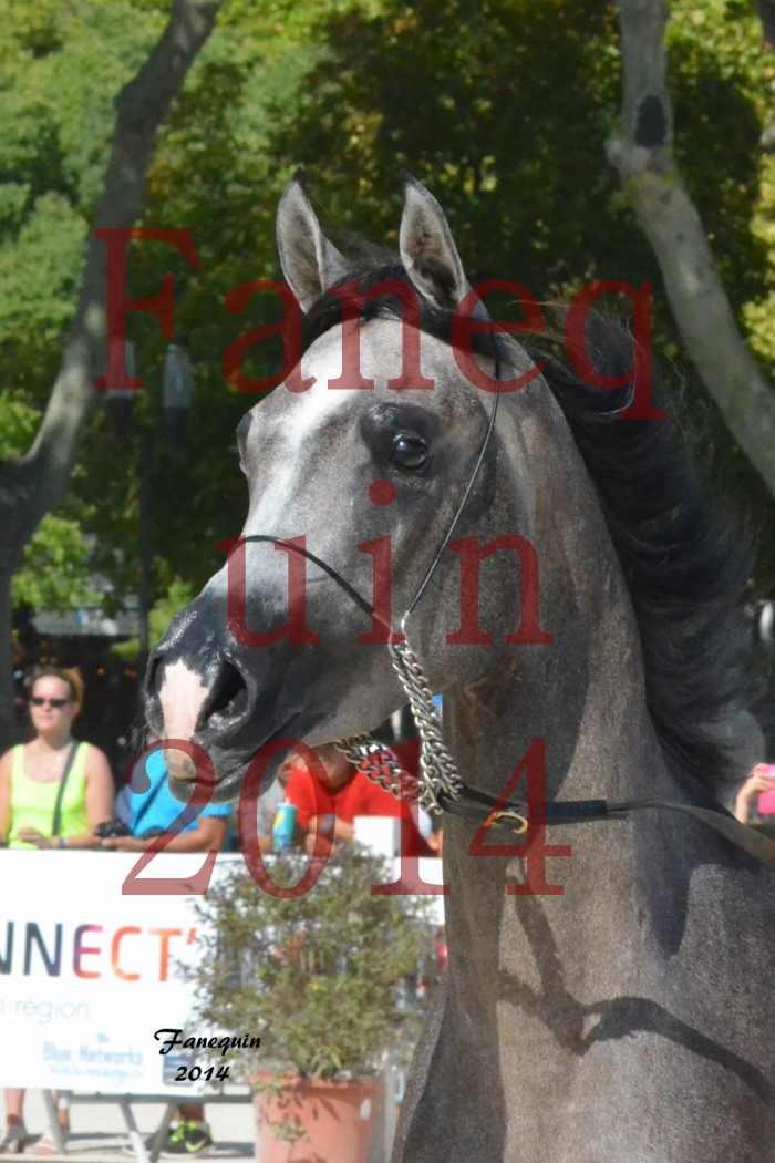 Concours National de Nîmes de chevaux ARABES 2014 - Notre Sélection - Portraits - JOSEPH'S BOUZIOLS - 03