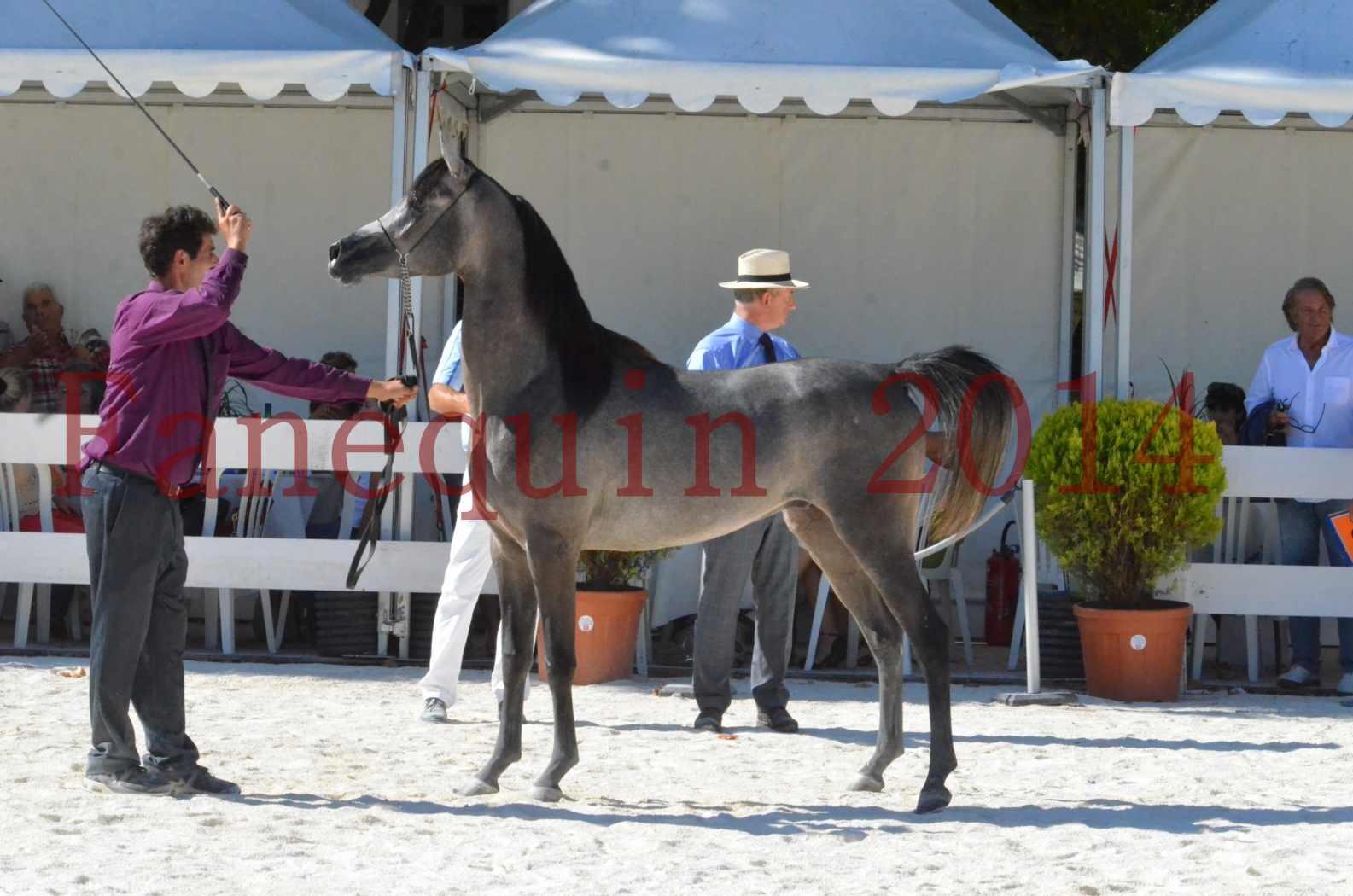 Concours National de Nîmes de chevaux ARABES 2014 - Championnat - JOSEPH'S BOUZIOLS - S 18