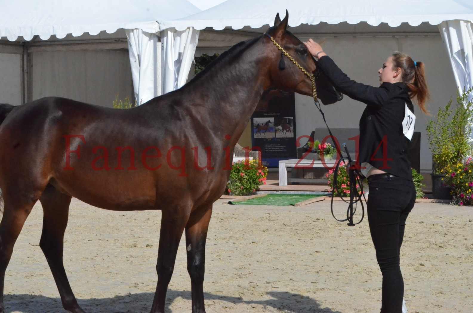 Championnat de FRANCE 2014 - Amateurs - JA KHALEB - 32