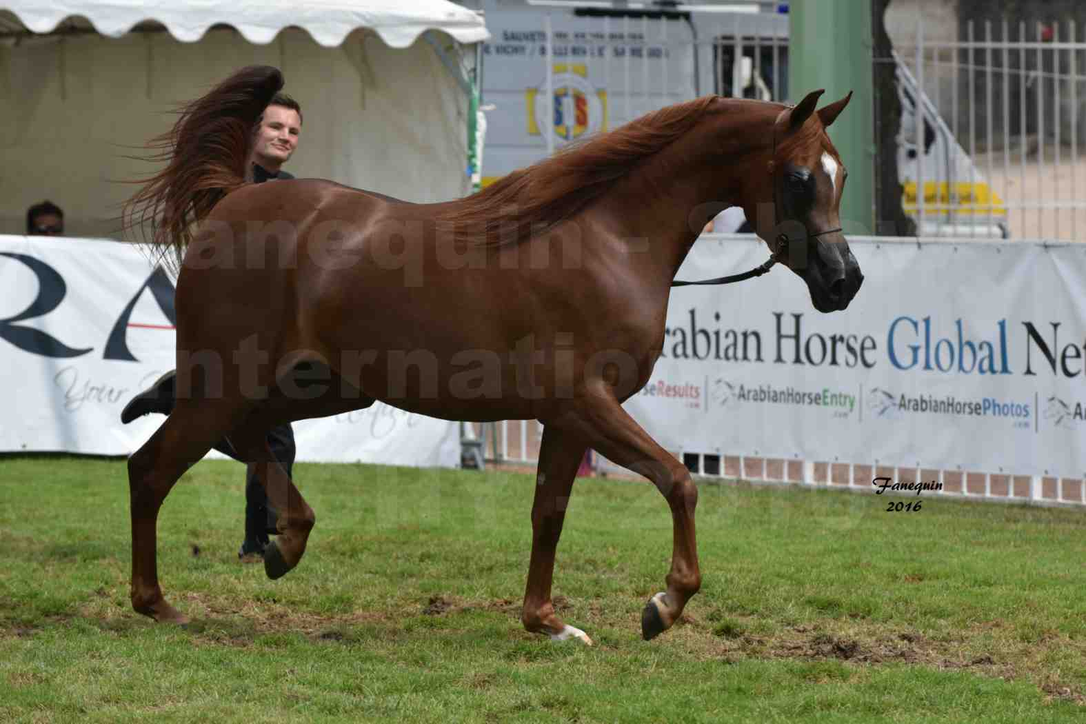International Arabian Horse Show B de VICHY 2016 - PEARL DE DJOON - Notre Sélection - 25