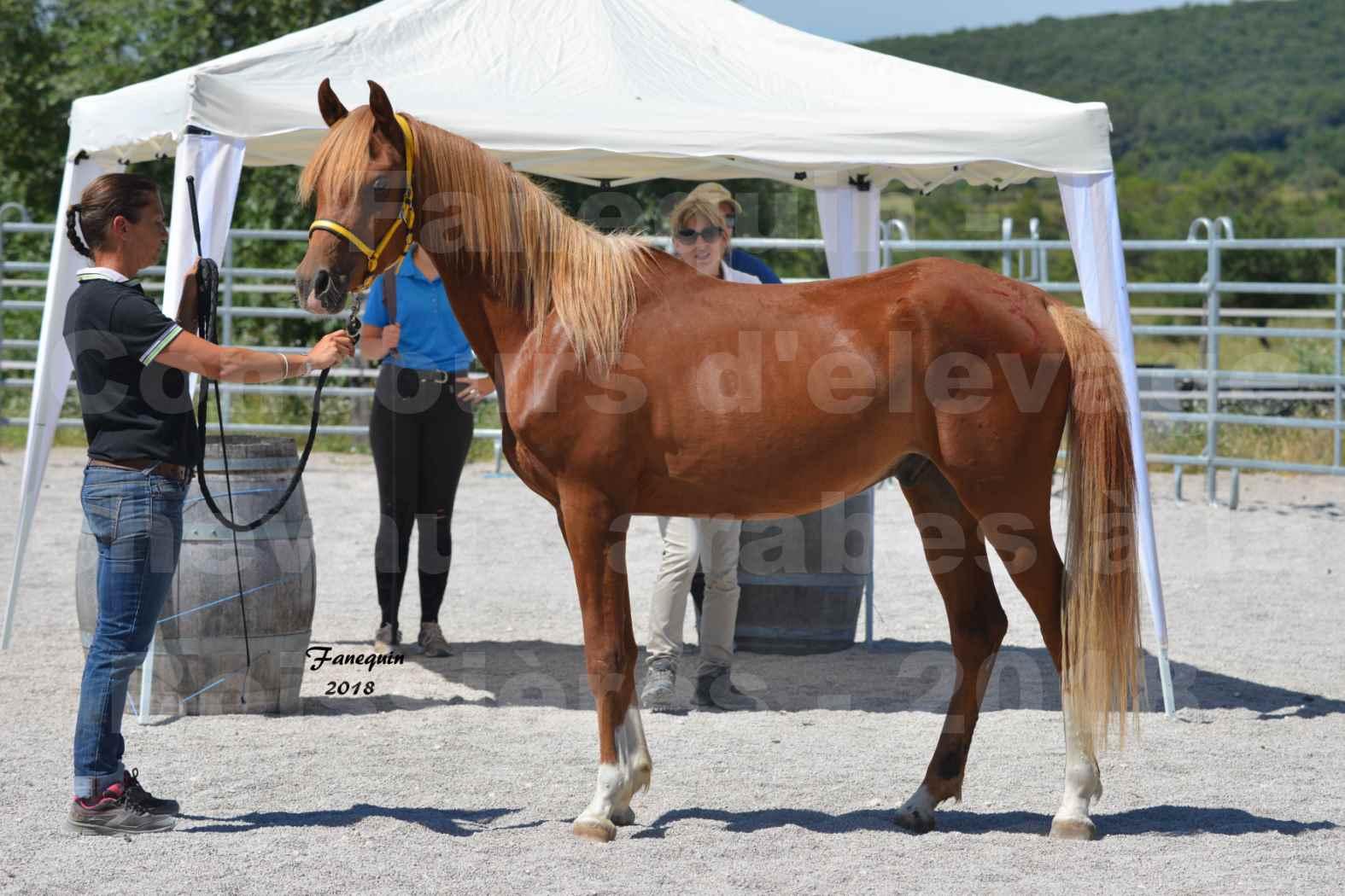 Concours d'Elevage de chevaux Arabes  le 27 juin 2018 à la BOISSIERE - FANGIO DES DOLINES - 02