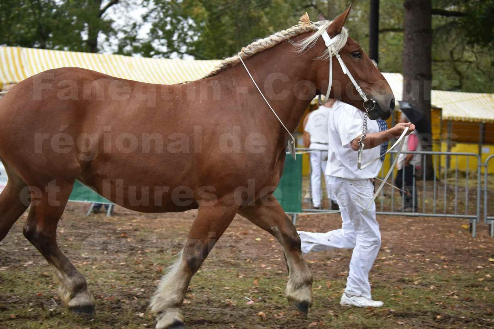 Concours Régional de chevaux de traits en 2017 - Trait COMTOIS - ELLIA DE FENEYROLS - 36